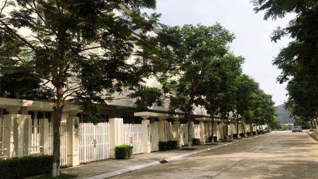 Phối cảnh liền kề khu đô thị Geleximco Lê Trọng Tấn